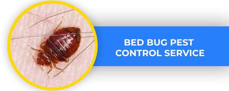 Bed Bug Control Yarralumla
