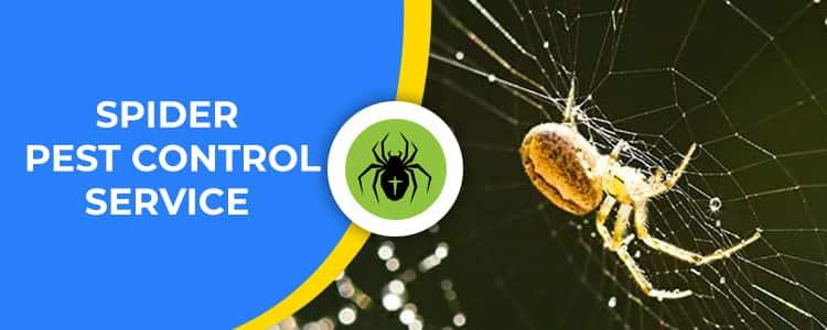 Spider Control Yarralumla